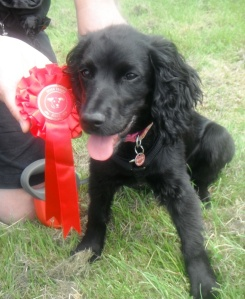 Bonnie at the Dog Show 002