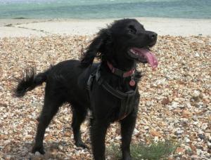 Bonnie hits the beach at Lepe