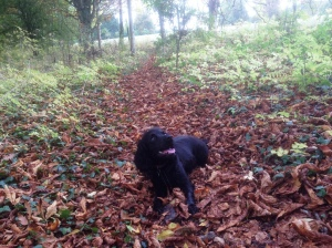 Bonnie in the leaves